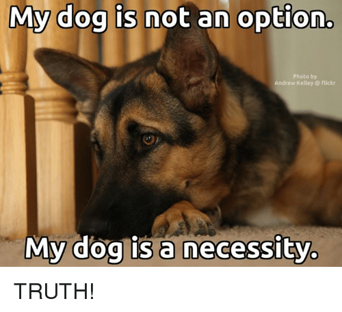Kelley: My dog is not an option.  Photo by  Andrew Kelley flickr  My dog is a necessity. TRUTH!