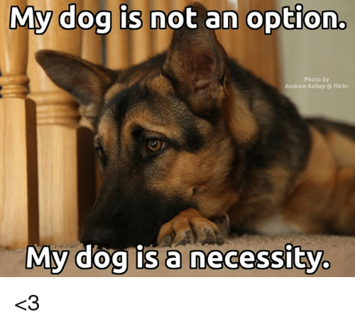 Kelley: My dog is not an option.  Photo by  Andrew Kelley @ flickr  My dog is a necessity <3