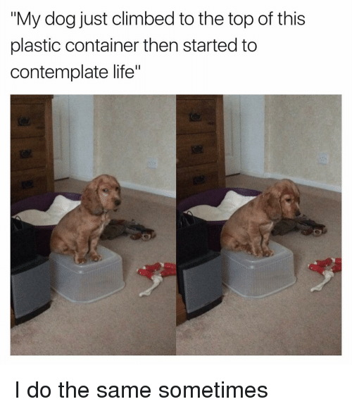 """contemplation: """"My dog just climbed to the top of this  plastic container then started to  contemplate life"""" I do the same sometimes"""
