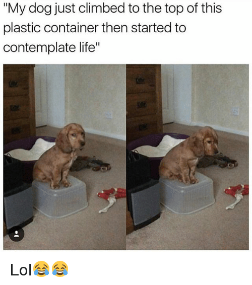 "contemplate: ""My dog just climbed to the top of this  plastic container then started to  contemplate life"" Lol😂😂"