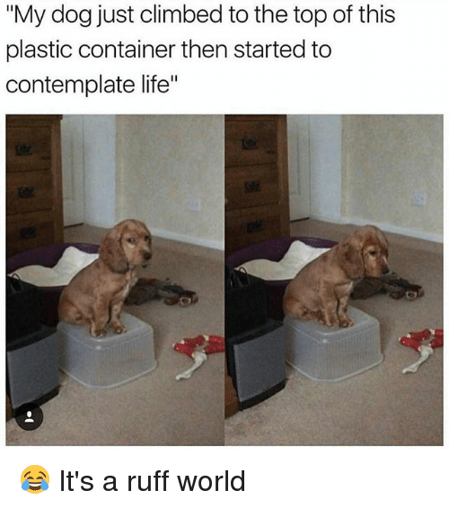 "contemplate: ""My dog just climbed to the top of this  plastic container then started to  contemplate life"" 😂 It's a ruff world"