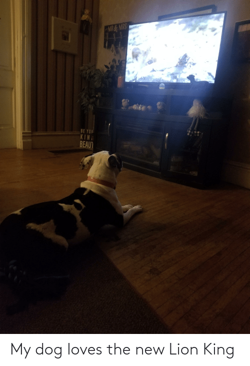 Lion King: My dog loves the new Lion King