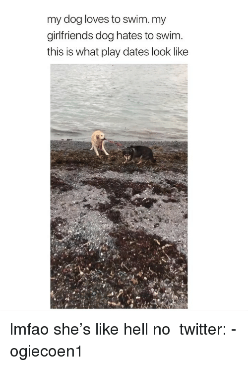Twitter, Girl Memes, and Girlfriends: my dog loves to swim. my  girlfriends dog hates to swim  this is what play dates look like lmfao she's like hell no ‪ twitter: -ogiecoen1 ‬