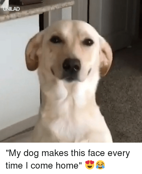 """This Face: """"My dog makes this face every time I come home"""" 😍😂"""