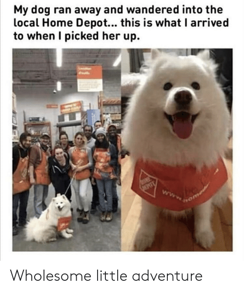 Home, Home Depot, and Wholesome: My dog ran away and wandered into the  local Home Depot... this is what I arrived  to when I picked her up. Wholesome little adventure