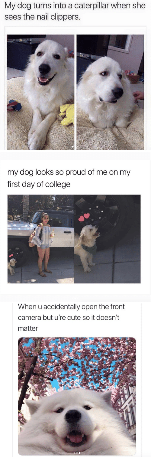 College, Cute, and Camera: My dog turns into a caterpillar when she  sees the nail clippers.   my dog looks so proud of me on my  first day of college  To   When u accidentally open the front  camera but u're cute so it doesn't  matter