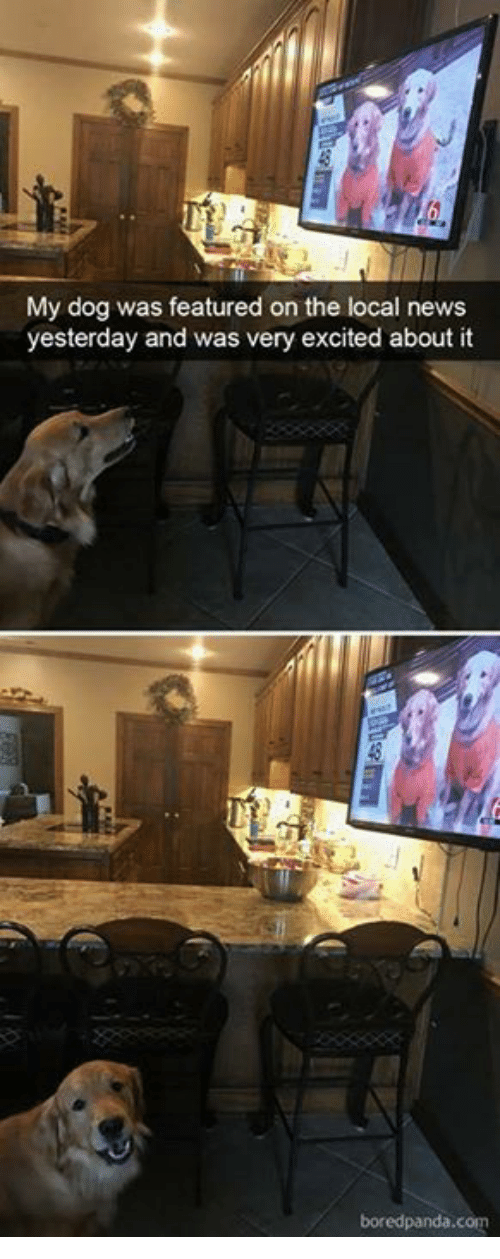 News, Dog, and Local: My dog was featured on the local news  yesterday and was very excited about it
