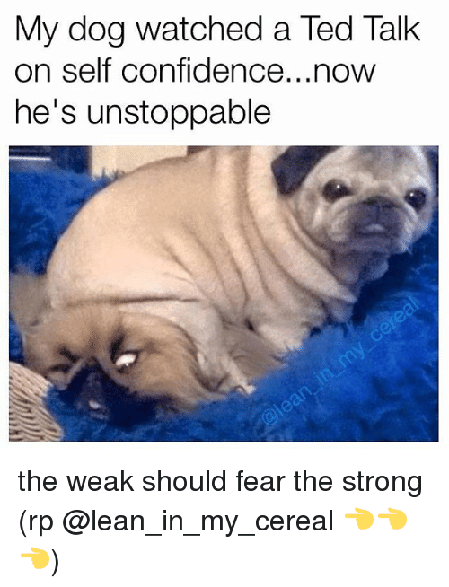 Confidence, Lean, and Memes: My dog watched a Ted Talk  on self confidence...now  he's unstoppable the weak should fear the strong (rp @lean_in_my_cereal 👈👈👈)