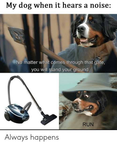 stand: My dog when it hears a noise:  No matter what comes through that gate,  you will stand your ground.  RUN Always happens