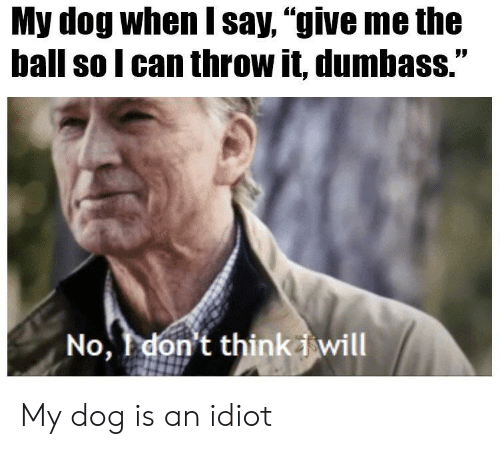 "Idiot, Dog, and Can: My dog when say, ""give me the  ball so l can throw it, dumbass.""  No, don't thinkd will My dog is an idiot"