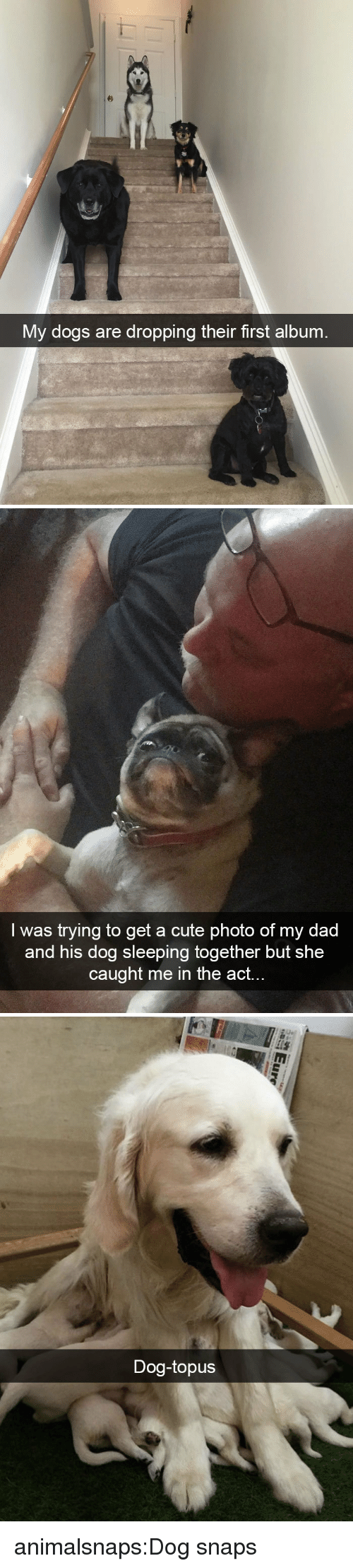 Cute, Dad, and Dogs: My dogs are dropping their first album   I was trying to get a cute photo of my dad  and his dog sleeping together but she  caught me in the act.   Dog-topus animalsnaps:Dog snaps