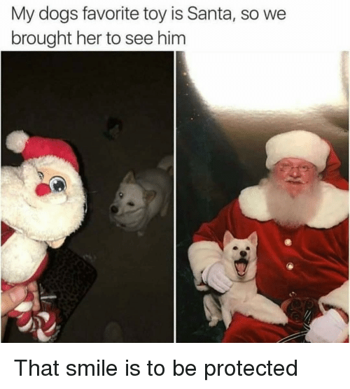 Dogs, Santa, and Smile: My dogs favorite toy is Santa, so we  brought her to see him That smile is to be protected