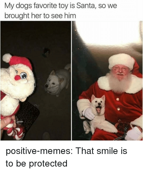 Dogs, Memes, and Tumblr: My dogs favorite toy is Santa, so we  brought her to see him positive-memes:  That smile is to be protected