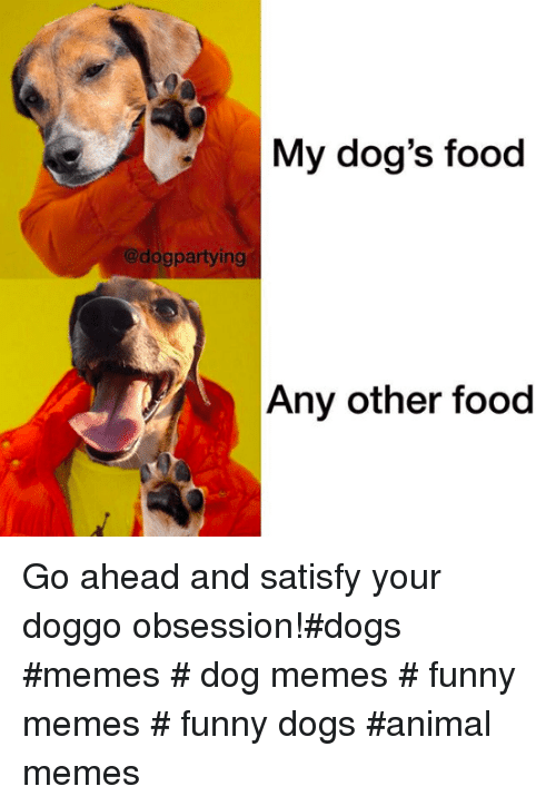 Dogs, Food, and Funny: My dog's food  @dogpartying  Any other food Go ahead and satisfy your doggo obsession!#dogs #memes # dog memes # funny memes # funny dogs #animal memes