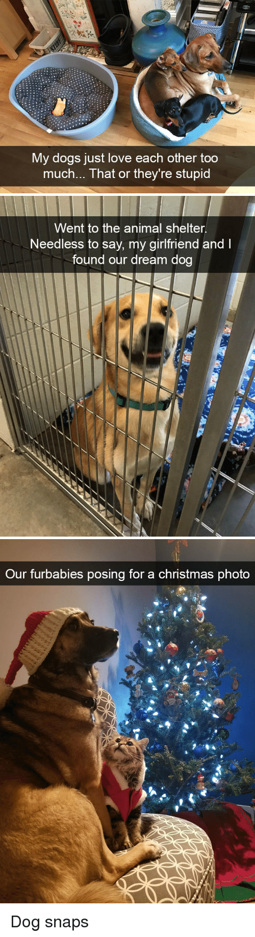 Animal Shelter: My dogs just love each other too  much... That or they're stupid   Went to the animal shelter.  Needless to say, my girlfriend and I  found our dream dog   Our furbabies posing for a christmas phota Dog snaps