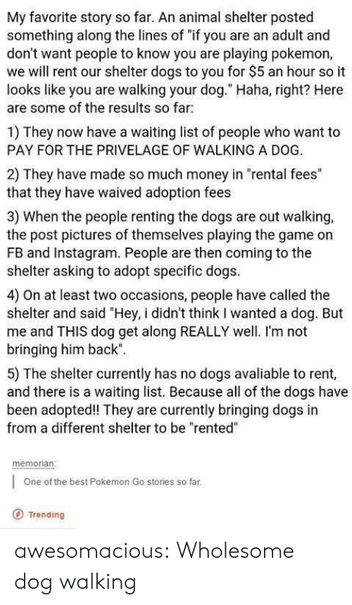 "Dogs, Instagram, and Money: My favorite story so far. An animal shelter posted  something along the lines of ""if you are an adult and  don't want people to know you are playing pokemon,  we will rent our shelter dogs to you for $5 an hour so it  looks like you are walking your dog."" Haha, right? Here  are some of the results so far  1) They now have a waiting list of people who want to  PAY FOR THE PRIVELAGE OF WALKING A DOG.  2) They have made so much money in ""rental fees""  that they have waived adoption fees  3) When the people renting the dogs are out walking,  the post pictures of themselves playing the game on  FB and Instagram. People are then coming to the  shelter asking to adopt specific dogs  4) On at least two occasions, people have called the  shelter and said ""Hey, i didn't think I wanted a dog. But  me and THIS dog get along REALLY well. I'm not  bringing him back""  5) The shelter currently has no dogs avaliable to rent,  and there is a waiting list. Because all of the dogs have  been adopted! They are currently bringing dogs in  from a different shelter to be ""rented""  memonan  One of the best Pokemon Go stories so far  O Trending awesomacious:  Wholesome dog walking"