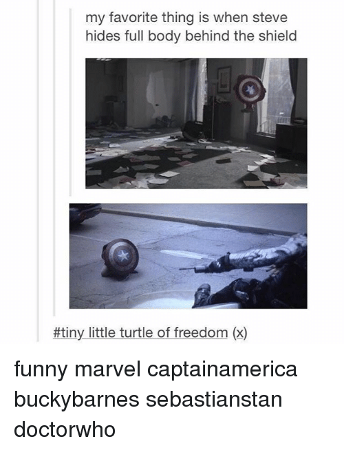 Funny Marvel: my favorite thing is when steve  hides full body behind the shield  #tiny little turtle of freedom (x) funny marvel captainamerica buckybarnes sebastianstan doctorwho