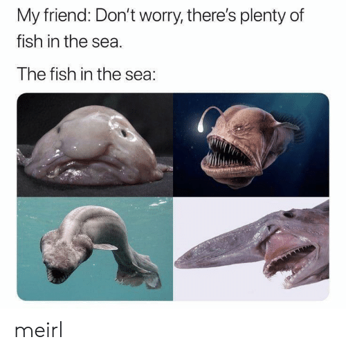 Fish, Plenty of Fish, and MeIRL: My friend: Don't worry, there's plenty of  fish in the sea  The fish in the sea: meirl