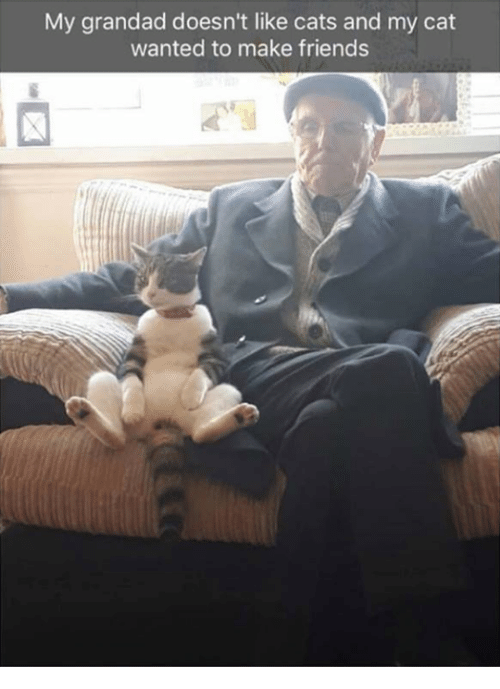 grandad: My grandad doesn't like cats and my cat  wanted to make friends