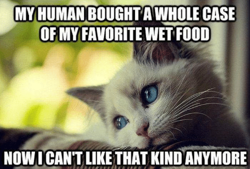 Food, Memes, and 🤖: MY HUMAN BOUGHT AWHOLE CASE  OF MY FAVORITE WET FOOD  NOWICAN'T LIKE THAT KIND ANYMORE