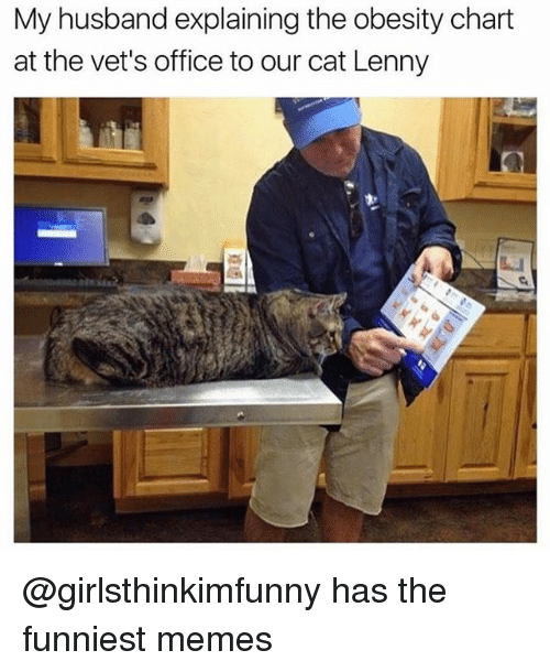 Funny, Lenny, and Memes: My husband explaining the obesity chart  at the vet's office to our cat Lenny @girlsthinkimfunny has the funniest memes