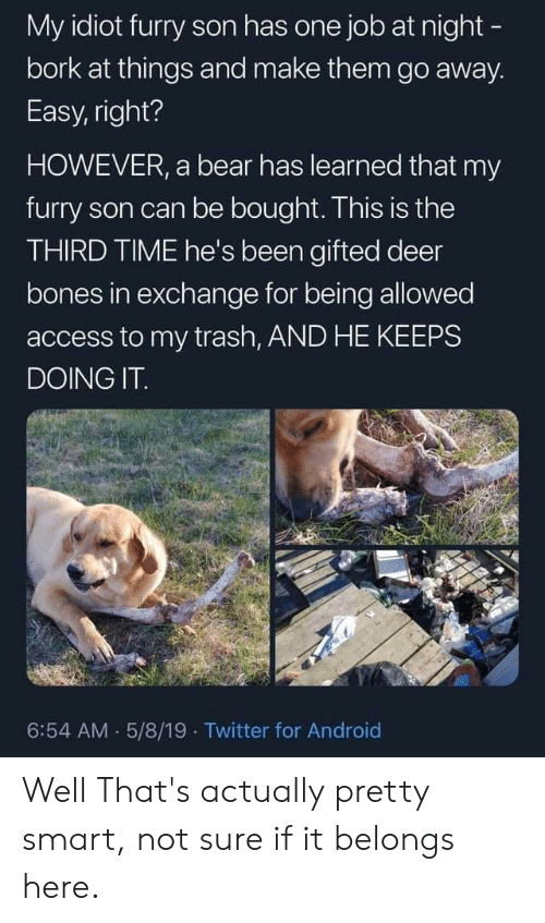 Android, Bones, and Deer: My idiot furry son has one job at night -  bork at things and make them go away.  Easy, right?  HOWEVER, a bear has learned that my  furry son can be bought. This is the  THIRD TIME he's been gifted deer  bones in exchange for being allowed  access to my trash, AND HE KEEPS  DOING IT  6:54 AM 5/8/19 Twitter for Android Well That's actually pretty smart, not sure if it belongs here.