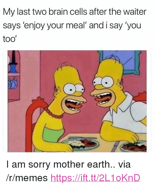 "Memes, Sorry, and Brain: My last two brain cells after the waiter  says 'enjoy your meal' and i say 'you  too' <p>I am sorry mother earth.. via /r/memes <a href=""https://ift.tt/2L1oKnD"">https://ift.tt/2L1oKnD</a></p>"