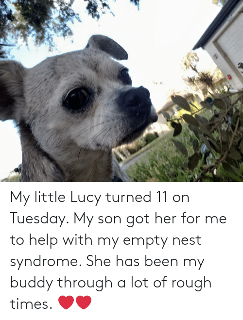 Help: My little Lucy turned 11 on Tuesday. My son got her for me to help with my empty nest syndrome. She has been my buddy through a lot of rough times. ❤❤