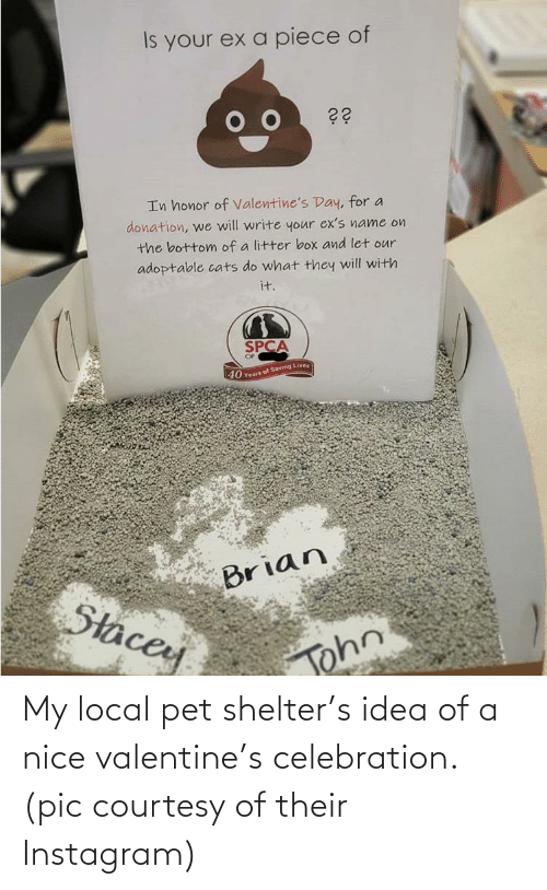 pet: My local pet shelter's idea of a nice valentine's celebration. (pic courtesy of their Instagram)