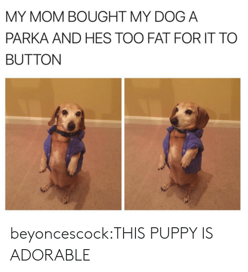 Target, Tumblr, and Blog: MY MOM BOUGHT MY DOG A  PARKA AND HES TOO FAT FOR IT TO  BUTTON beyoncescock:THIS PUPPY IS ADORABLE
