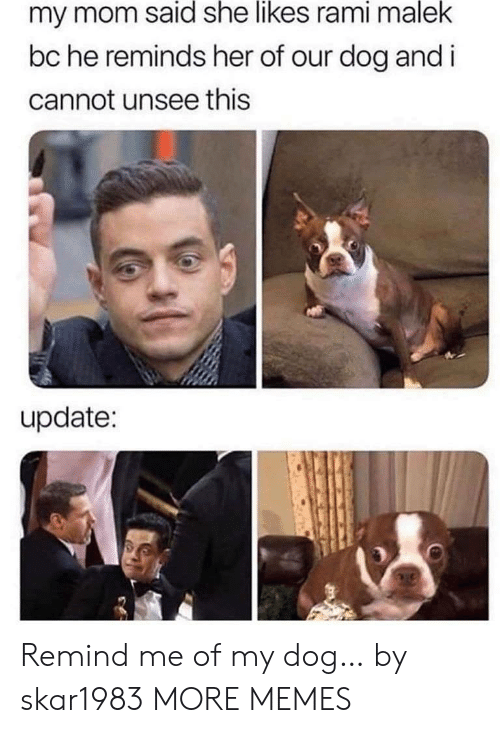 I Cannot: my mom said she likes rami malek  bc he reminds her of our dog and i  cannot unsee this  update: Remind me of my dog… by skar1983 MORE MEMES
