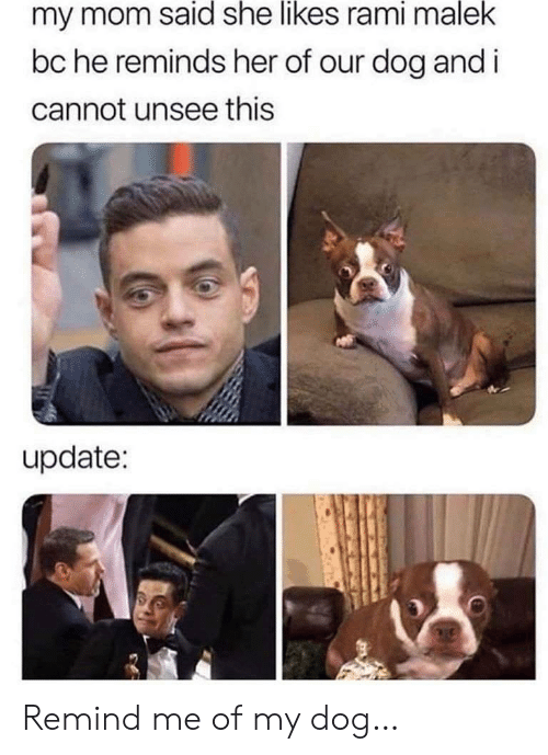 I Cannot: my mom said she likes rami malek  bc he reminds her of our dog and i  cannot unsee this  update: Remind me of my dog…