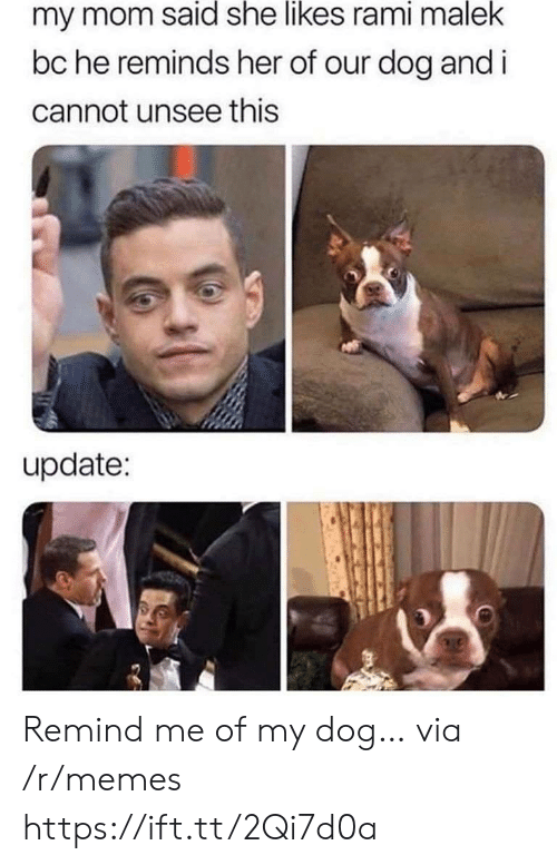 I Cannot: my mom said she likes rami malek  bc he reminds her of our dog and i  cannot unsee this  update: Remind me of my dog… via /r/memes https://ift.tt/2Qi7d0a