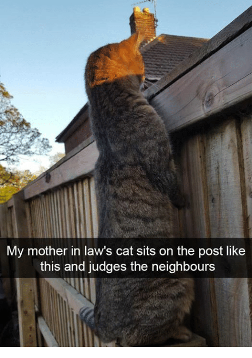 Memes, 🤖, and Cat: My mother in law's cat sits on the post like  this and judges the neighbours