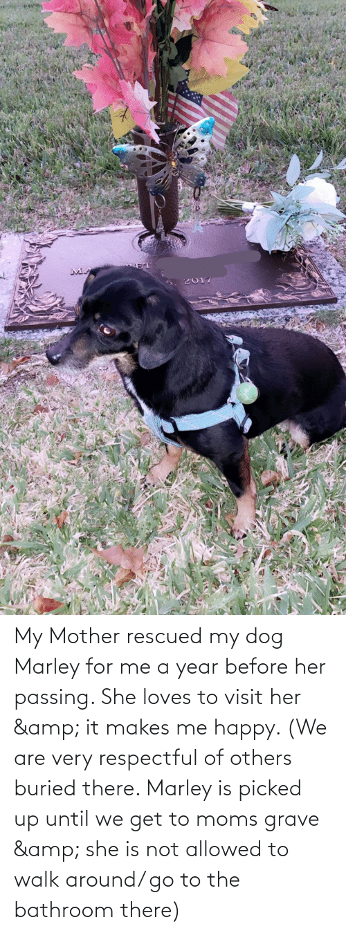 respectful: My Mother rescued my dog Marley for me a year before her passing. She loves to visit her & it makes me happy. (We are very respectful of others buried there. Marley is picked up until we get to moms grave & she is not allowed to walk around/ go to the bathroom there)