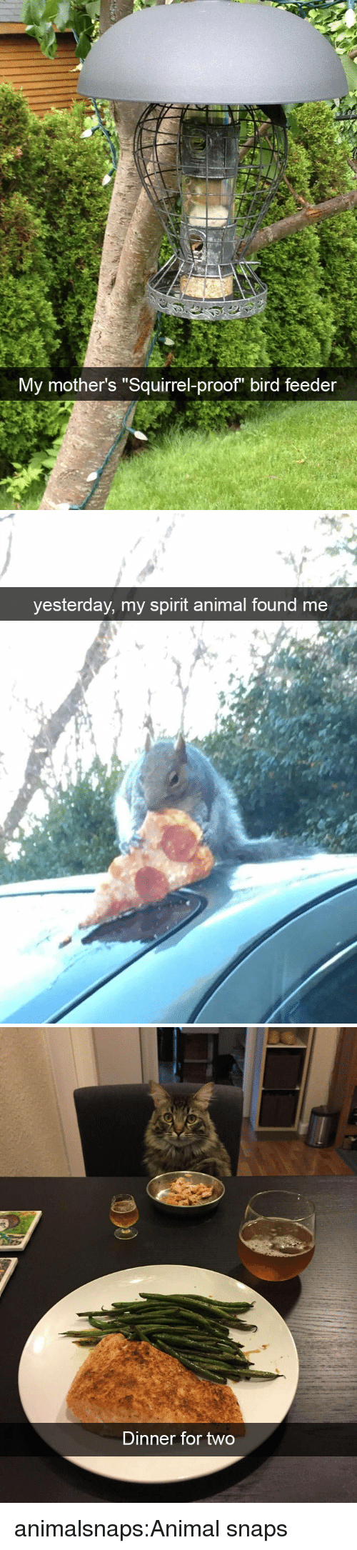 "Target, Tumblr, and Animal: My mother's ""Squirrel-proof bird feeder   yesterday, my spirit animal found me   Dinner for two animalsnaps:Animal snaps"
