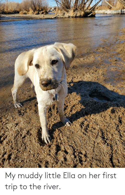 ella: My muddy little Ella on her first trip to the river.
