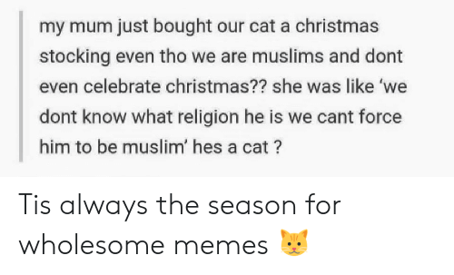 Christmas, Memes, and Muslim: my mum just bought our cat a christmas  stocking even tho we are muslims and dont  even celebrate christmas?? she was like 'we  dont know what religion he is we cant force  him to be muslim' hes a cat? Tis always the season for wholesome memes 🐱