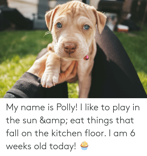Floor: My name is Polly! I like to play in the sun & eat things that fall on the kitchen floor. I am 6 weeks old today! 🧁
