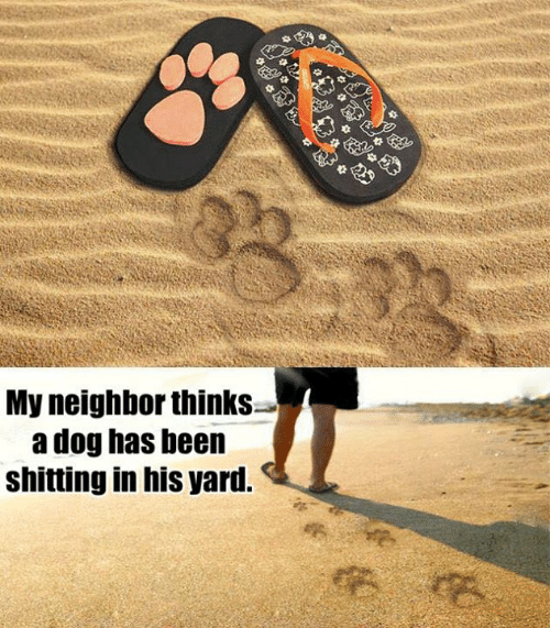 Dank, Been, and 🤖: My neighbor thinks-  a dog has been  shitting in his yard.