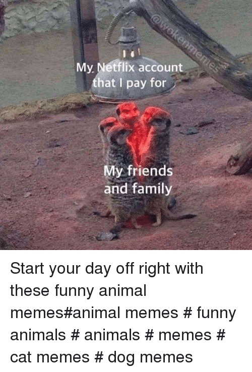 Animals Memes: My Netflix account  that I pay for  My friends  and family Start your day off right with these funny animal memes#animal memes # funny animals # animals # memes # cat memes # dog memes