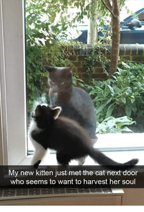 Memes, 🤖, and Her: My new kitten just met the cat next door  who seems to want to harvest her soul