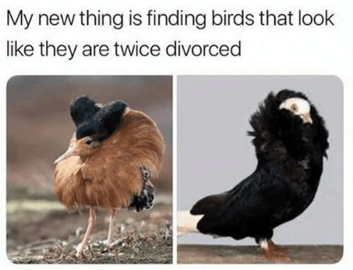 My New: My new thing is finding birds that look  like they are twice divorced
