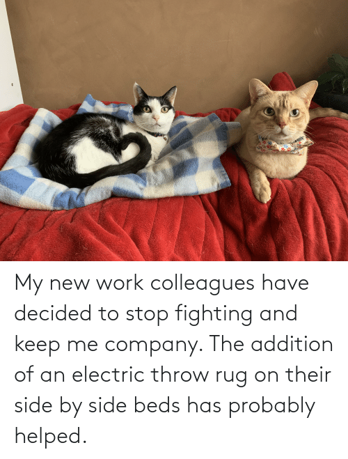 colleagues: My new work colleagues have decided to stop fighting and keep me company. The addition of an electric throw rug on their side by side beds has probably helped.