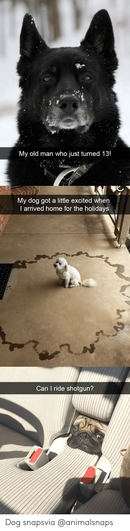 Old Man, Target, and Tumblr: My old man who just turned 13!   My dog got a little excited when  I arrived home for the holidays   Can I ride shotgun? Dog snapsvia @animalsnaps