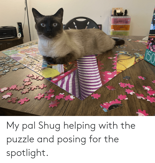 Shug: My pal Shug helping with the puzzle and posing for the spotlight.