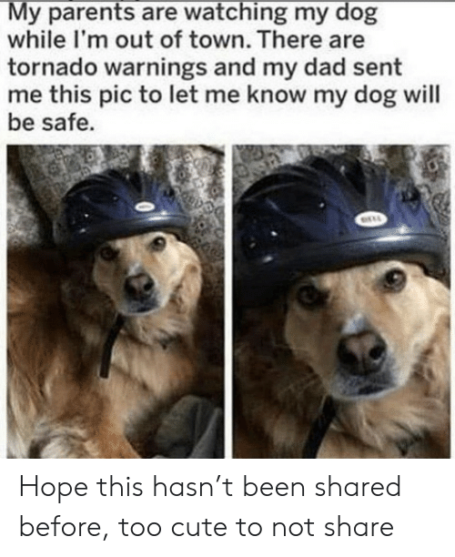 too cute: My parents are watching my dog  while I'm out of town. There are  tornado warnings and my dad sent  me this pic to let me know my dog will  be safe. Hope this hasn't been shared before, too cute to not share