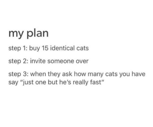 "Cats, How, and Ask: my plan  step 1: buy 15 identical cats  step 2: invite someone over  step 3: when they ask how many cats you have  say ""just one but he's really fast"""