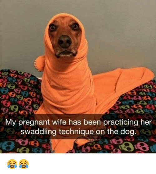 Pregnant Wife: My pregnant wife has been practicing her  swaddling technique on the dog. 😂😂