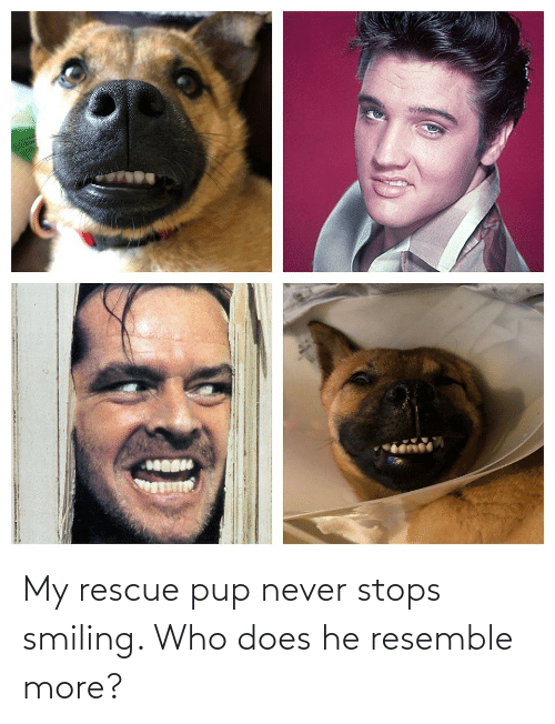 Stops: My rescue pup never stops smiling. Who does he resemble more?